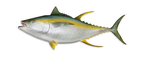Yellowfin Tuna (Ahi)
